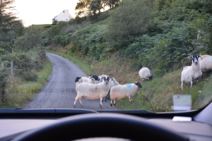 Traffic on the way to Dunscaith