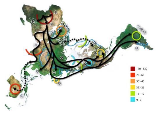 Polar Representation of the spread of mtDNA Haplogroups
