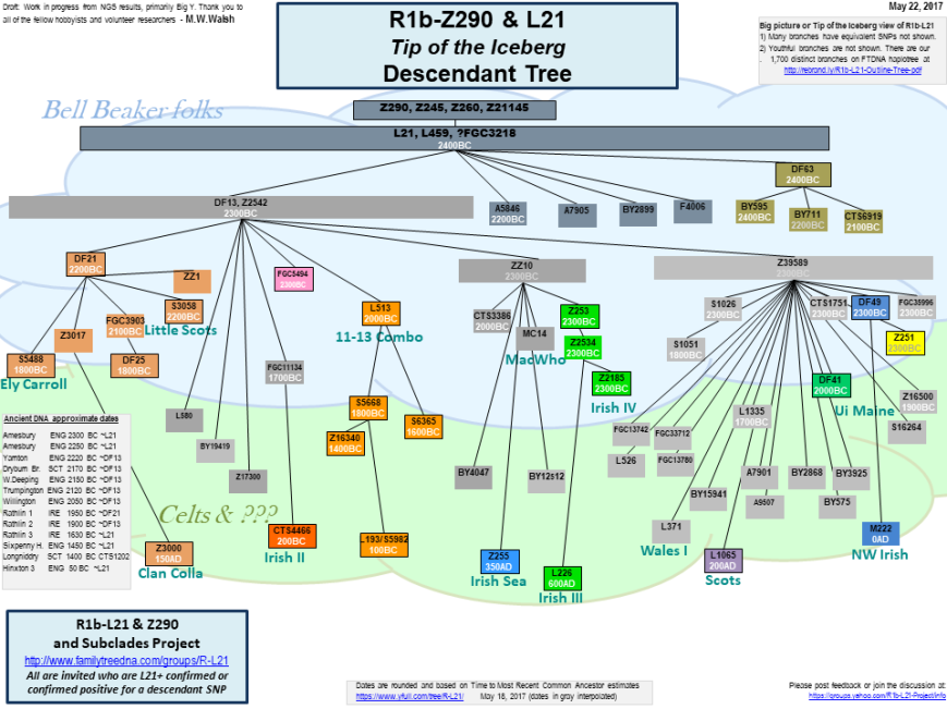 R1b-L21_Descendant_Tree